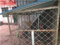 低价出售一个狗笼子