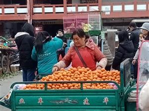 霸道的橘�