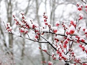 《咏雪》文/刘根屯