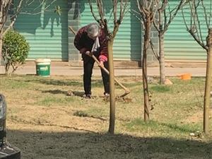 �y��公寓小�^�G化�е欣习傩�y�_挖,破�木G化植物