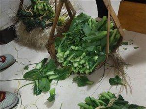 自產無公害綠色蔬菜
