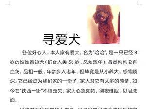 凌源市重金寻找爱犬~提供有效线索找狗成功后酬谢1000元