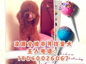 凌源市全城寻找爱犬,酬金3000元,求助各位好心人帮忙转发