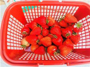 五常市安家草莓采摘园