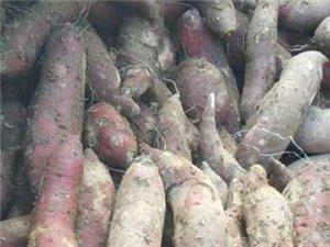红薯粉丝,粉面子,紫薯