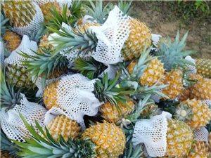 海南琼海本地菠萝