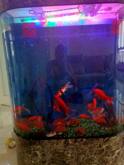 大魚缸,在淘寶上買的,原價2000,上淘寶查一下就能看到,599不議價,自行取走,不送貨,可給您安排...