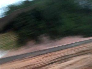 �川到博白的中心路�@里路好��