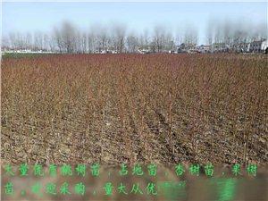 大量出售果树种苗