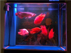 1米X30下循环缸,一条30公分长金龙,4条鹦鹉鱼,成本价出售