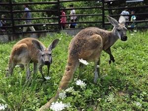 西安秦嶺野生動物園免費開放