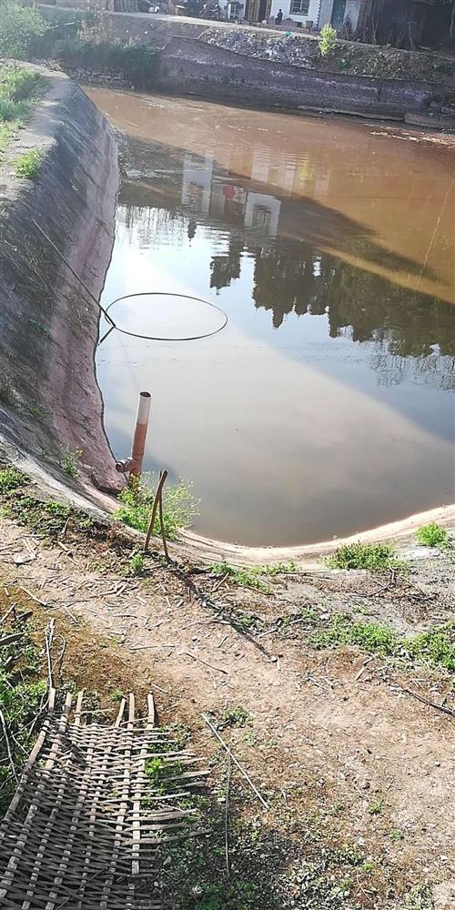 魚塘明天開始打魚,三四斤的白鰱,三四斤的草魚,鯉魚鯽魚若干,有需要的朋友請聯系??! 15111882...