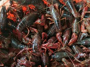 自家虾池,不投肥,无污染,水质干净 大虾肉多饱满25/斤,中虾20/斤(肉一般),谁要说声,送货到...