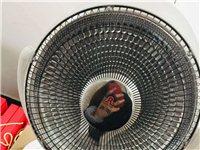 容声取暖器转让,去年12月份买的,超大号,买来就放店里用过一次,现低价69元转,要的联系我。