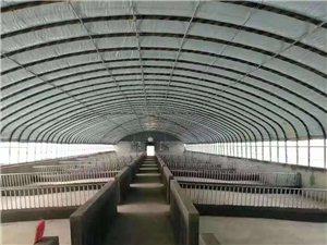 专业建造养殖温室大棚