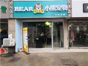 通州小熊宠物cfa猫舍