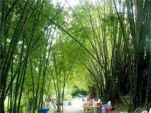 農家樂(1)百色溪竹山莊形象圖