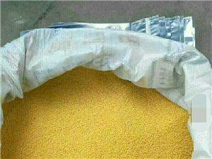 青州庙子纯天然,无公害 ,无化肥的春米.